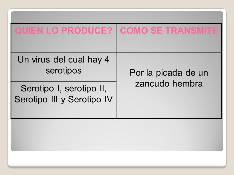 QUIEN LO PRODUCE?COMO SE TRANSMITE Un virus del cual hay 4 serotipos Por la picada de un zancudo hembra Serotipo I, serotipo II, Serotipo III y Serotipo IV