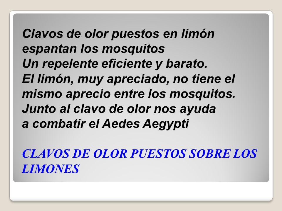 Clavos de olor puestos en limón espantan los mosquitos Un repelente eficiente y barato.