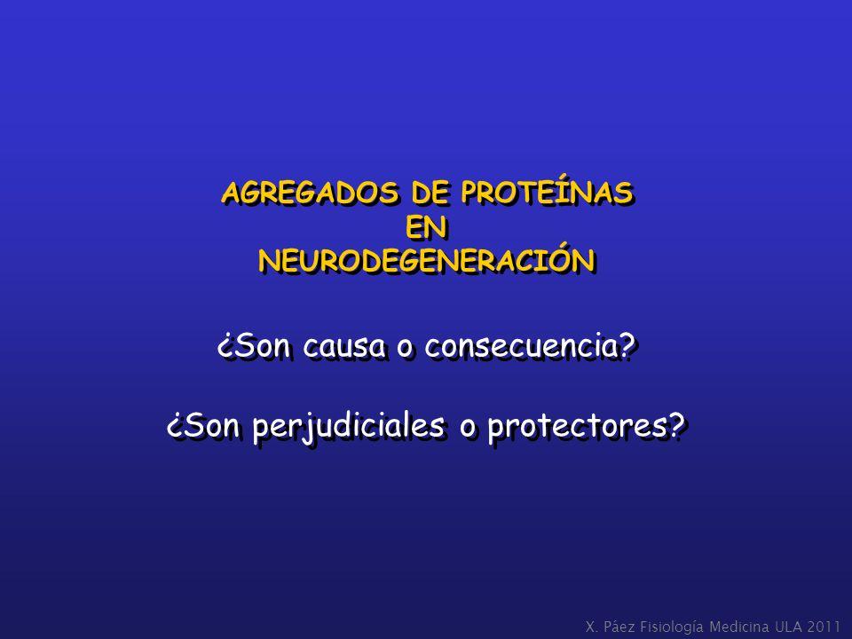 AGREGADOS DE PROTEÍNAS EN NEURODEGENERACIÓN AGREGADOS DE PROTEÍNAS EN NEURODEGENERACIÓN ¿Son causa o consecuencia? ¿Son perjudiciales o protectores? ¿