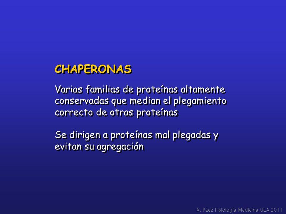 CHAPERONAS Varias familias de proteínas altamente conservadas que median el plegamiento correcto de otras proteínas Se dirigen a proteínas mal plegada
