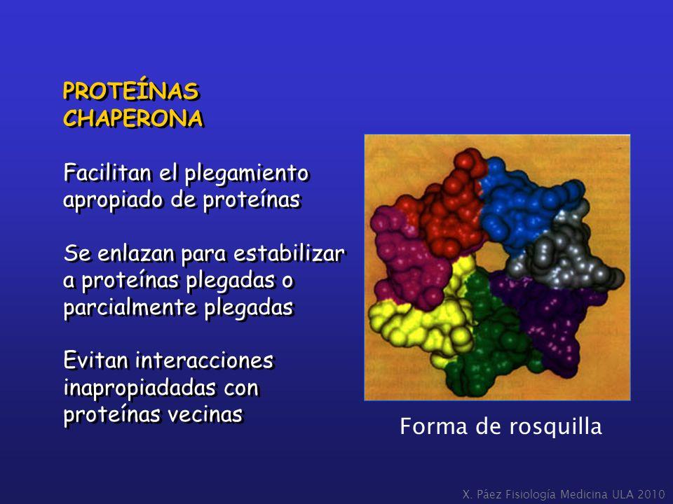 PROTEÍNAS CHAPERONA Facilitan el plegamiento apropiado de proteínas Se enlazan para estabilizar a proteínas plegadas o parcialmente plegadas Evitan in