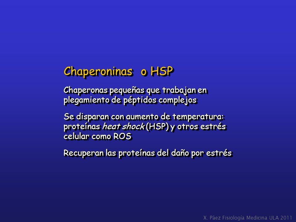 Chaperoninas o HSP Chaperonas pequeñas que trabajan en plegamiento de péptidos complejos Se disparan con aumento de temperatura: proteínas heat shock