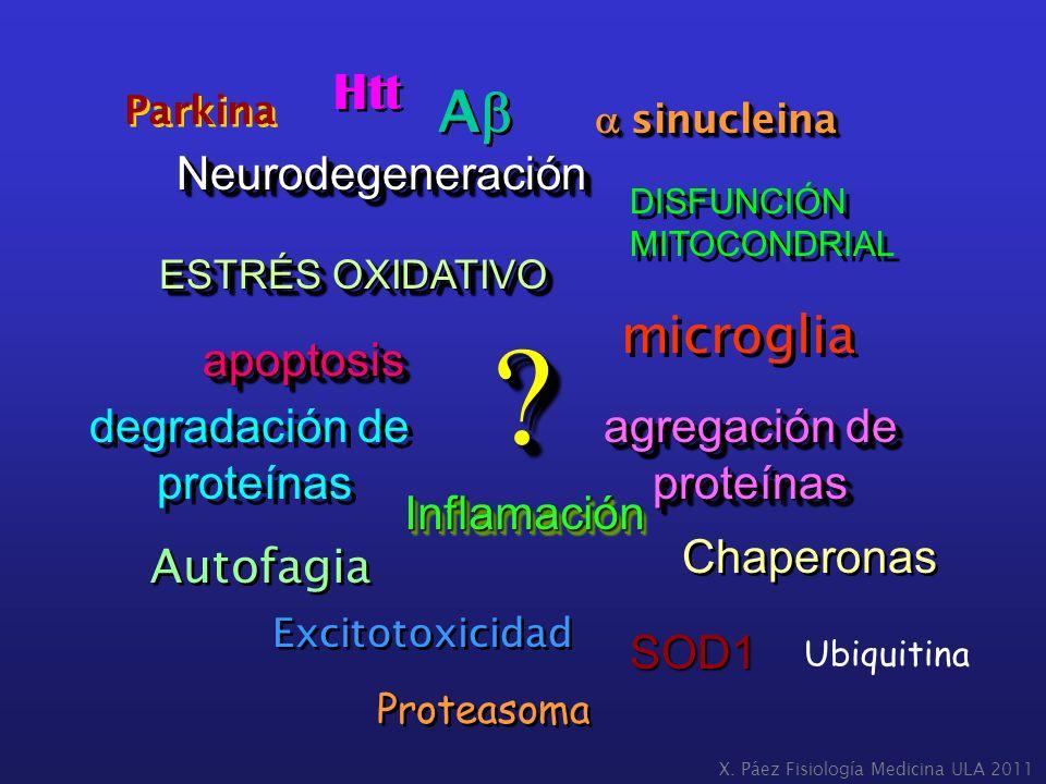 ESTRÉS OXIDATIVO NeurodegeneraciónNeurodegeneración apoptosisapoptosis agregación de proteínas proteínas InflamaciónInflamación DISFUNCIÓN MITOCONDRIA