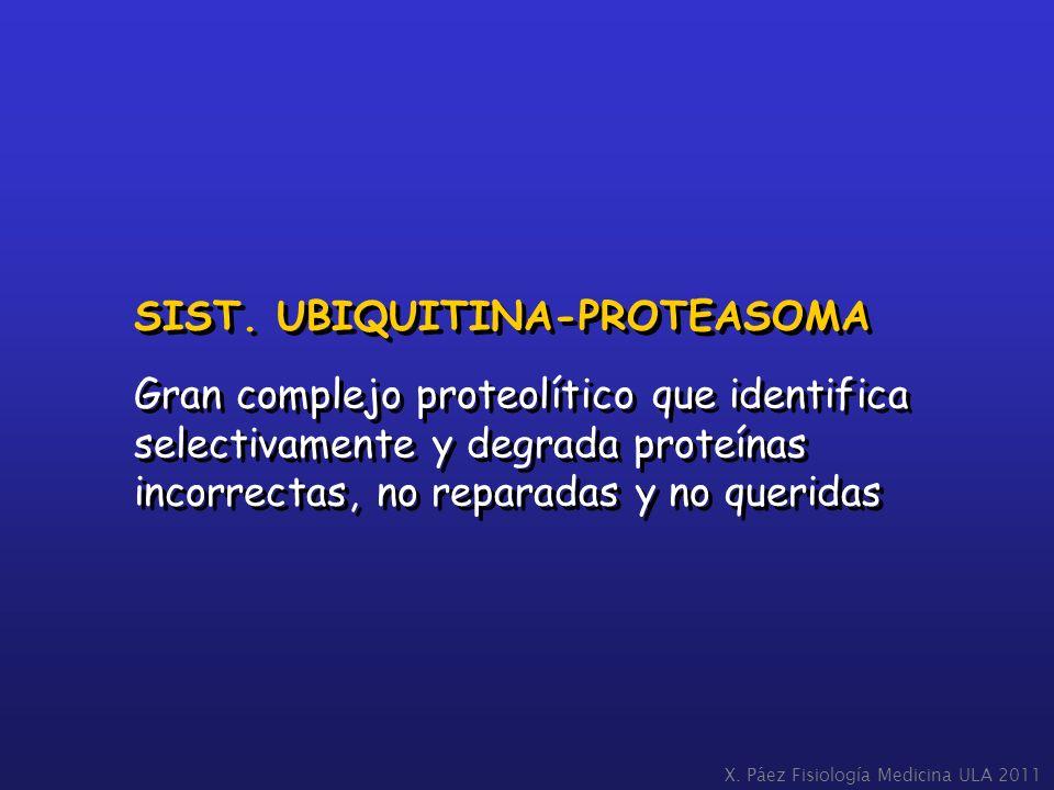 SIST. UBIQUITINA-PROTEASOMA Gran complejo proteolítico que identifica selectivamente y degrada proteínas incorrectas, no reparadas y no queridas SIST.