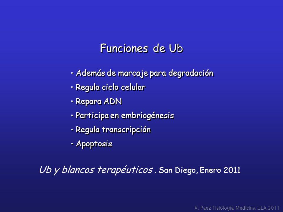 X. Páez Fisiología Medicina ULA 2011 Funciones de Ub Además de marcaje para degradación Regula ciclo celular Repara ADN Participa en embriogénesis Reg