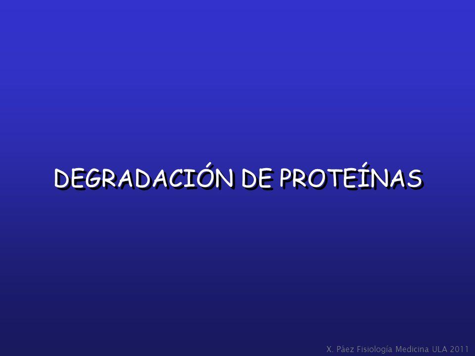 DEGRADACIÓN DE PROTEÍNAS X. Páez Fisiología Medicina ULA 2011