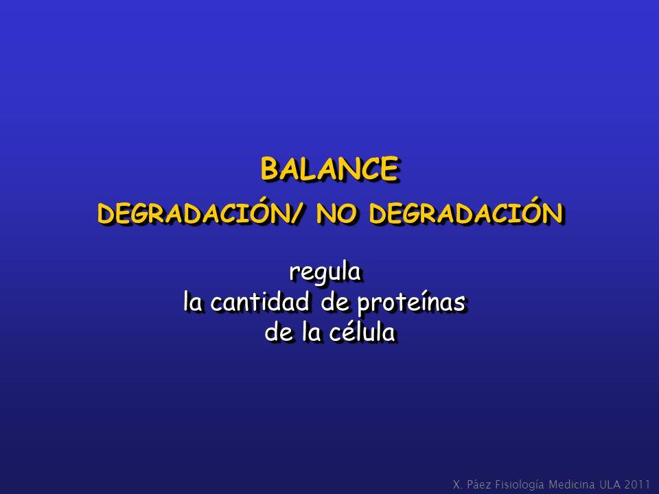 BALANCE DEGRADACIÓN/ NO DEGRADACIÓN regula la cantidad de proteínas de la célula BALANCE DEGRADACIÓN/ NO DEGRADACIÓN regula la cantidad de proteínas d
