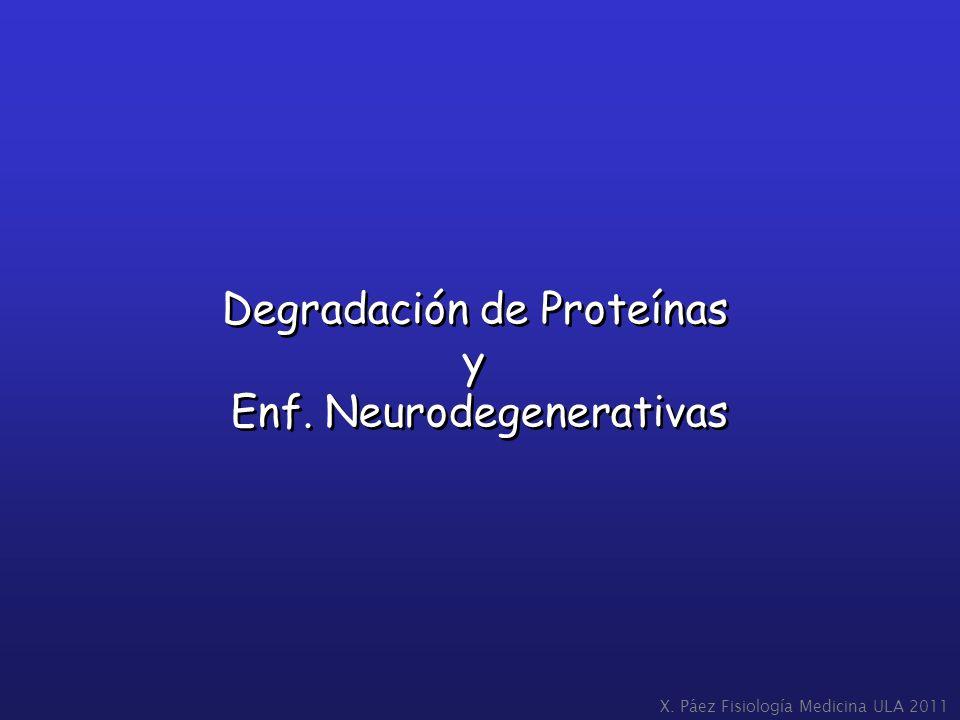 Degradación de Proteínas y Enf. Neurodegenerativas Degradación de Proteínas y Enf. Neurodegenerativas X. Páez Fisiología Medicina ULA 2011