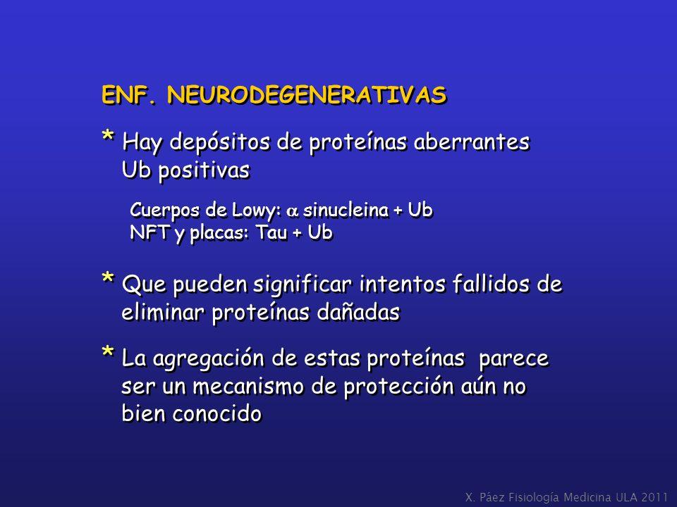ENF. NEURODEGENERATIVAS * Hay depósitos de proteínas aberrantes Ub positivas Cuerpos de Lowy: sinucleina + Ub NFT y placas: Tau + Ub * Que pueden sign