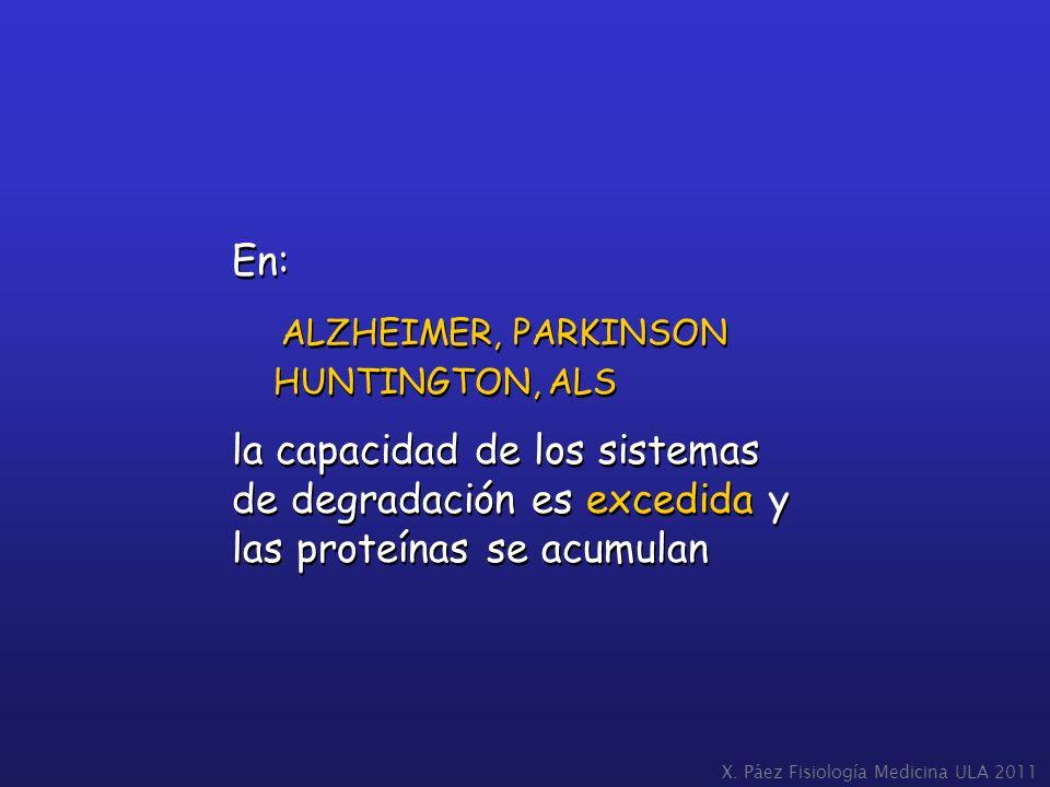 En: ALZHEIMER, PARKINSON HUNTINGTON, ALS la capacidad de los sistemas de degradación es excedida y las proteínas se acumulan En: ALZHEIMER, PARKINSON
