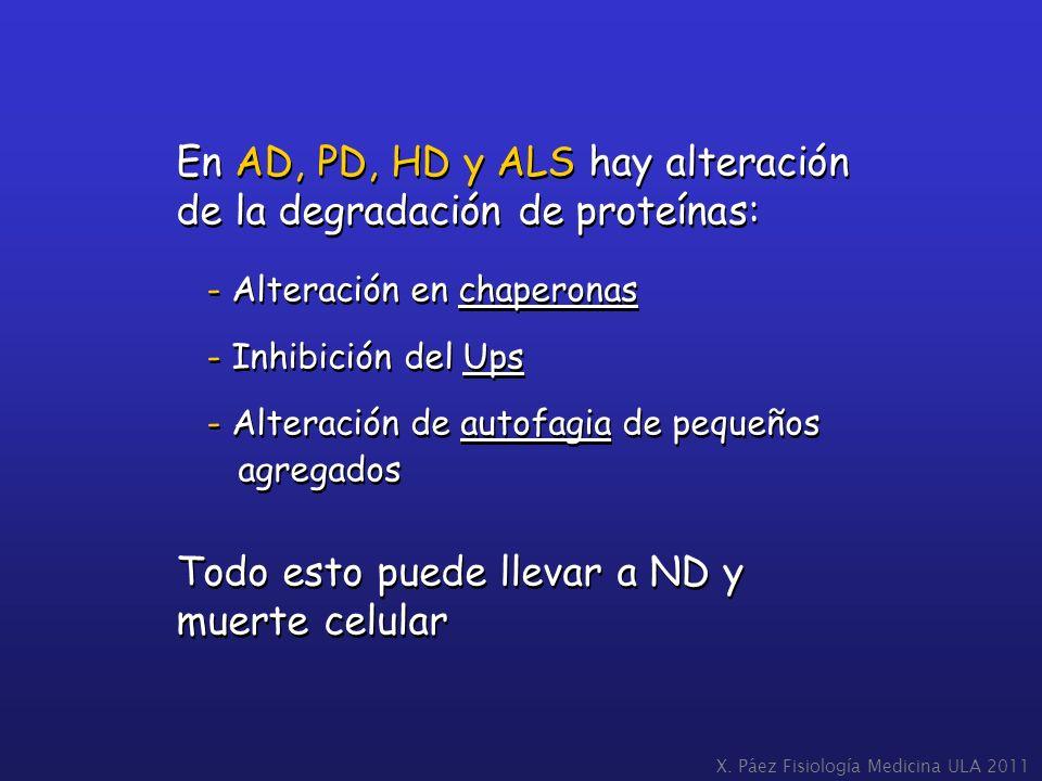 En AD, PD, HD y ALS hay alteración de la degradación de proteínas: - Alteración en chaperonas - Inhibición del Ups - Alteración de autofagia de pequeñ