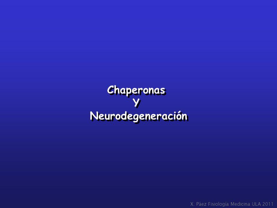 Chaperonas Y Neurodegeneración Chaperonas Y Neurodegeneración X. Páez Fisiología Medicina ULA 2011