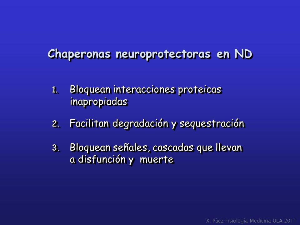 1. Bloquean interacciones proteicas inapropiadas inapropiadas 2. Facilitan degradación y sequestración 3. Bloquean señales, cascadas que llevan a disf