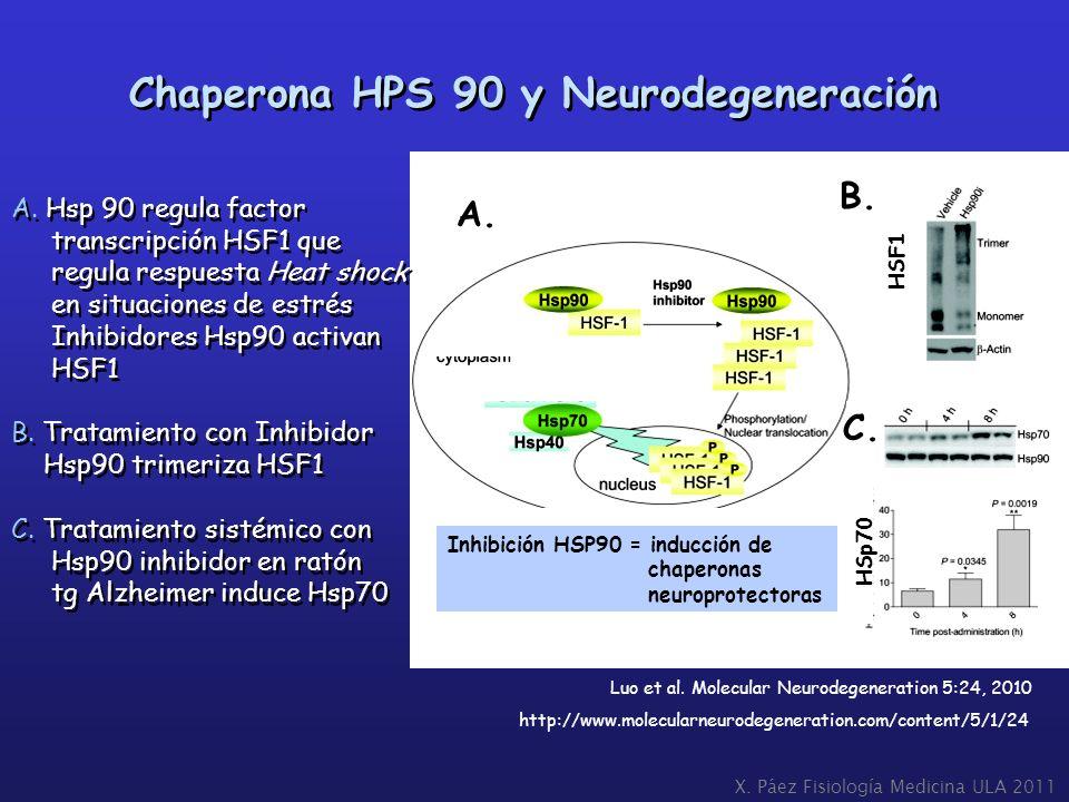 Chaperona HPS 90 y Neurodegeneración Luo et al. Molecular Neurodegeneration 5:24, 2010 http://www.molecularneurodegeneration.com/content/5/1/24 A. Hsp