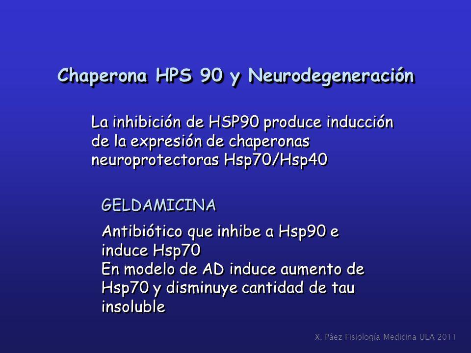 Chaperona HPS 90 y Neurodegeneración La inhibición de HSP90 produce inducción de la expresión de chaperonas neuroprotectoras Hsp70/Hsp40 La inhibición