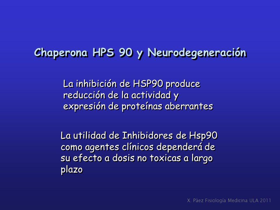 Chaperona HPS 90 y Neurodegeneración La inhibición de HSP90 produce reducción de la actividad y expresión de proteínas aberrantes La inhibición de HSP