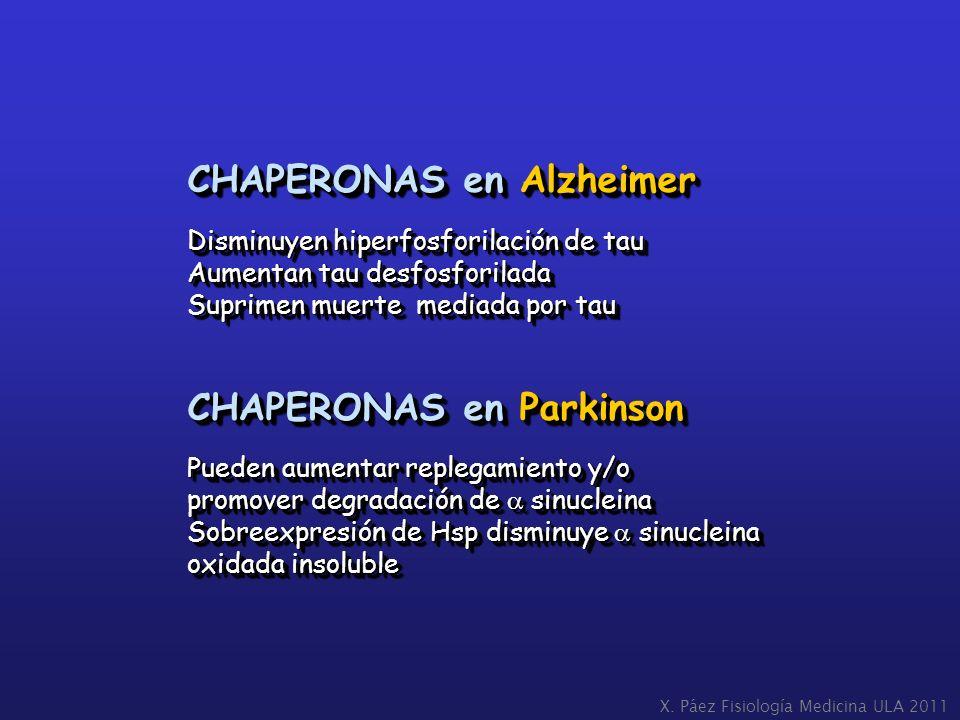 CHAPERONAS en Alzheimer Disminuyen hiperfosforilación de tau Aumentan tau desfosforilada Suprimen muerte mediada por tau CHAPERONAS en Parkinson Puede