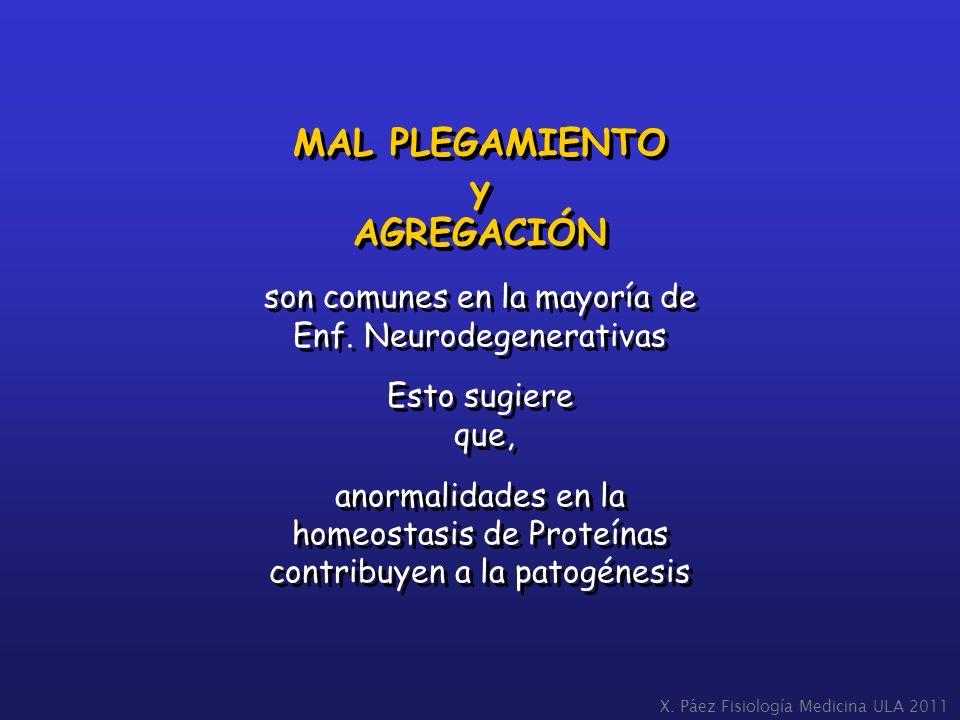 MAL PLEGAMIENTO y AGREGACIÓN son comunes en la mayoría de Enf. Neurodegenerativas Esto sugiere que, anormalidades en la homeostasis de Proteínas contr