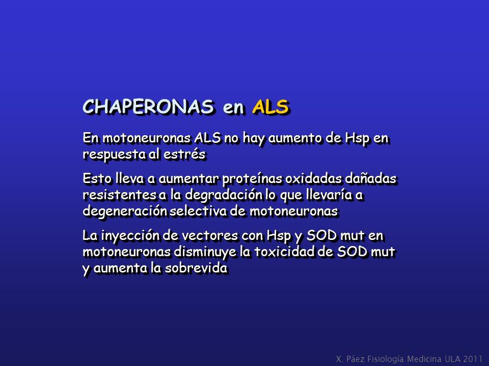 CHAPERONAS en ALS En motoneuronas ALS no hay aumento de Hsp en respuesta al estrés Esto lleva a aumentar proteínas oxidadas dañadas resistentes a la d