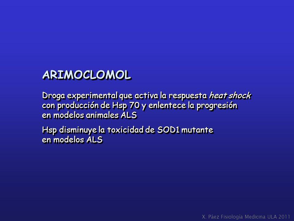 ARIMOCLOMOL Droga experimental que activa la respuesta heat shock con producción de Hsp 70 y enlentece la progresión en modelos animales ALS Hsp dismi