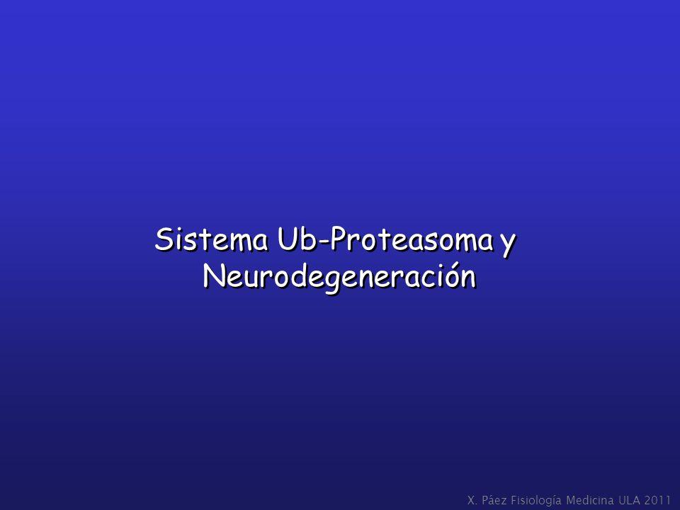 Sistema Ub-Proteasoma y Neurodegeneración Sistema Ub-Proteasoma y Neurodegeneración X. Páez Fisiología Medicina ULA 2011