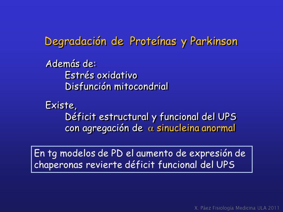 Además de: Estrés oxidativo Disfunción mitocondrial Existe, Déficit estructural y funcional del UPS con agregación de sinucleina anormal Además de: Es
