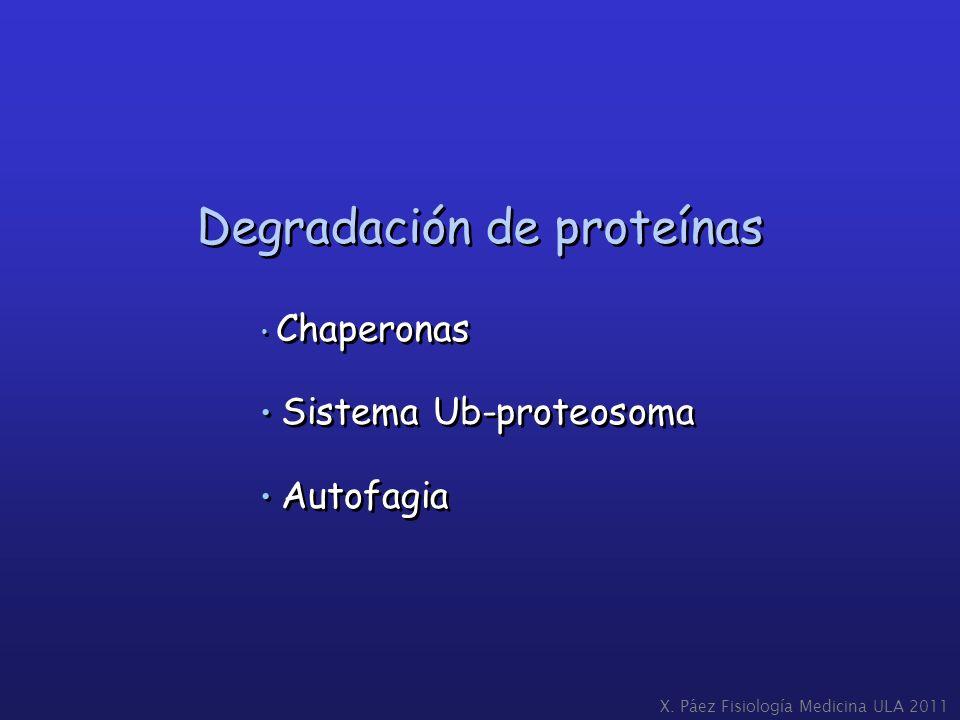 X. Páez Fisiología Medicina ULA 2011 Chaperonas Sistema Ub-proteosoma Autofagia Chaperonas Sistema Ub-proteosoma Autofagia Degradación de proteínas