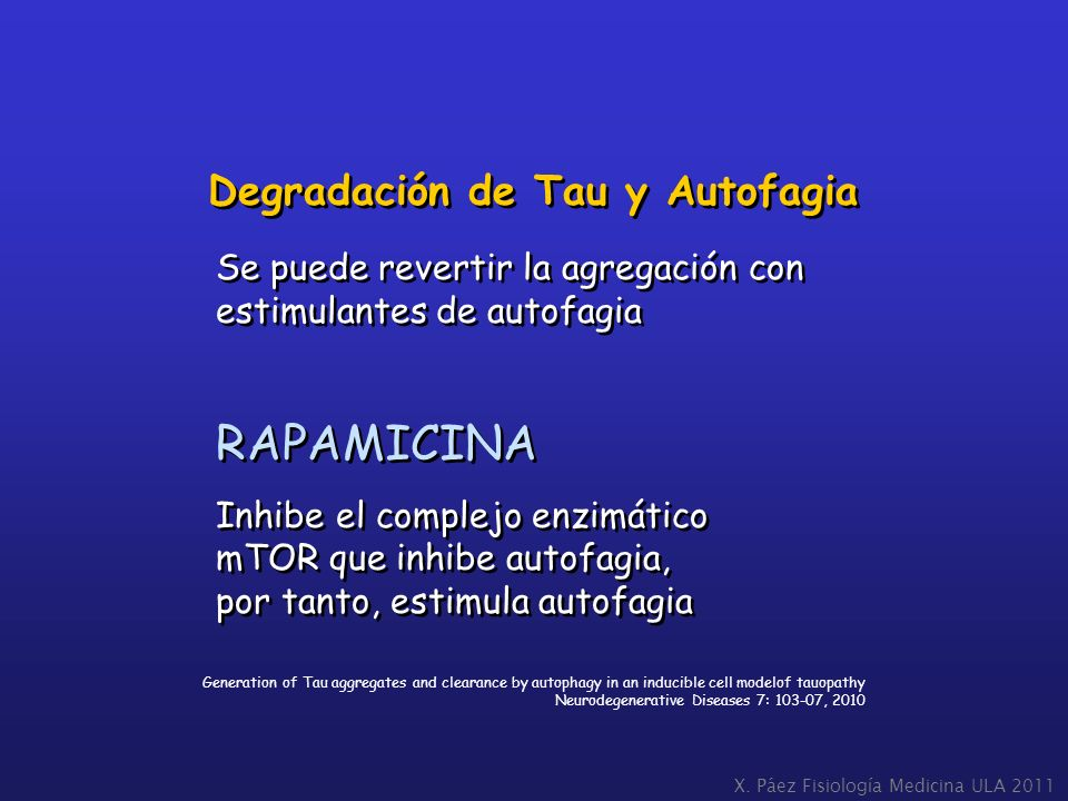 X. Páez Fisiología Medicina ULA 2011 Generation of Tau aggregates and clearance by autophagy in an inducible cell modelof tauopathy Neurodegenerative