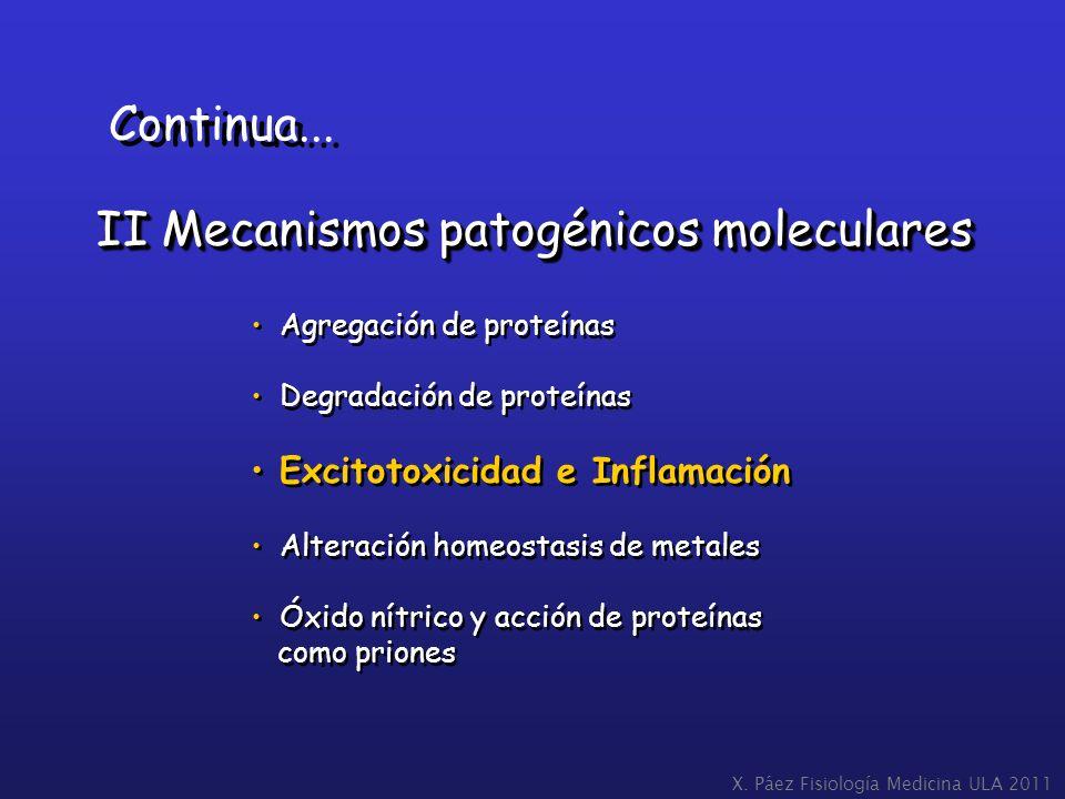 X. Páez Fisiología Medicina ULA 2011 II Mecanismos patogénicos moleculares Continua... Agregación de proteínas Degradación de proteínas Excitotoxicida