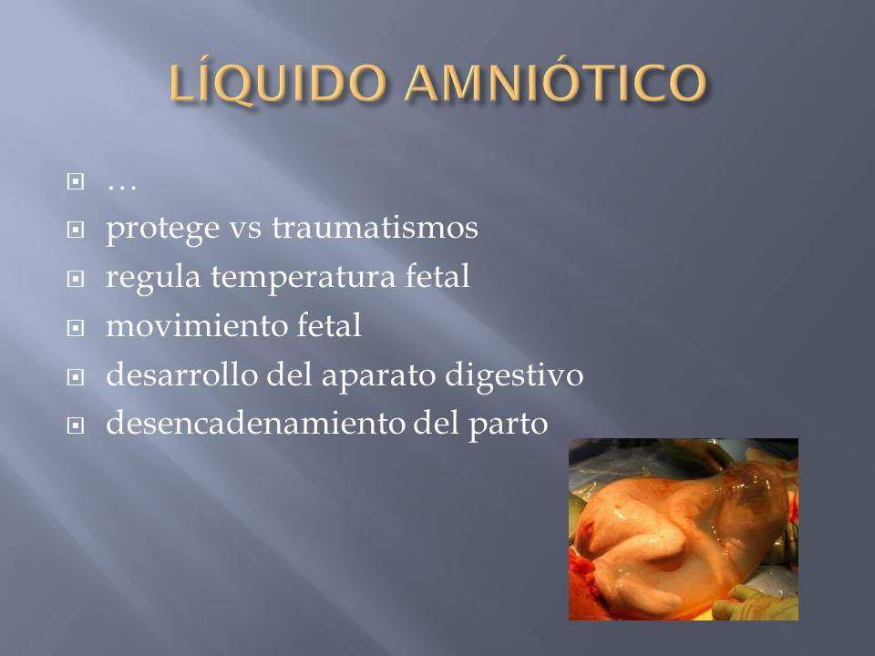 protege vs traumatismos regula temperatura fetal movimiento fetal desarrollo del aparato digestivo desencadenamiento del parto