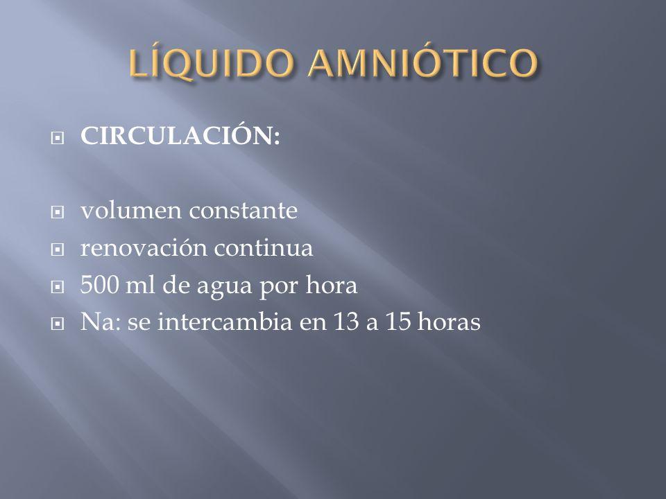 CIRCULACIÓN: volumen constante renovación continua 500 ml de agua por hora Na: se intercambia en 13 a 15 horas