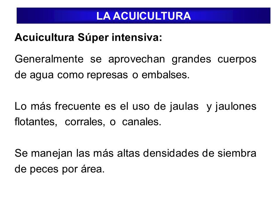 Acuicultura Súper intensiva: Generalmente se aprovechan grandes cuerpos de agua como represas o embalses. Lo más frecuente es el uso de jaulas y jaulo