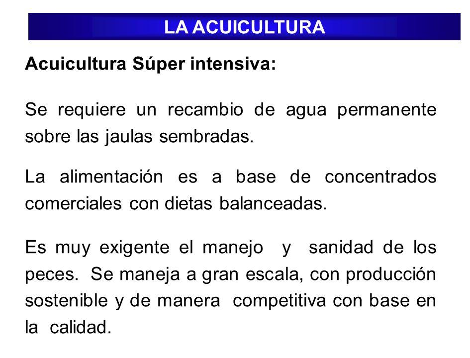Acuicultura Súper intensiva: Se requiere un recambio de agua permanente sobre las jaulas sembradas. La alimentación es a base de concentrados comercia