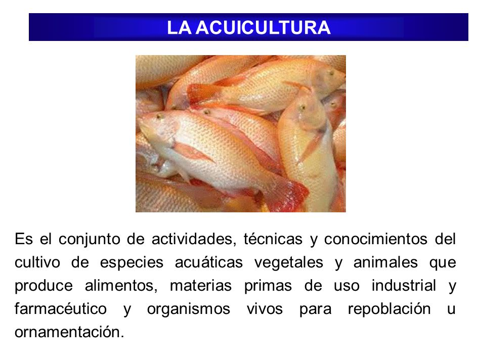 LA ACUICULTURA Es el conjunto de actividades, técnicas y conocimientos del cultivo de especies acuáticas vegetales y animales que produce alimentos, m