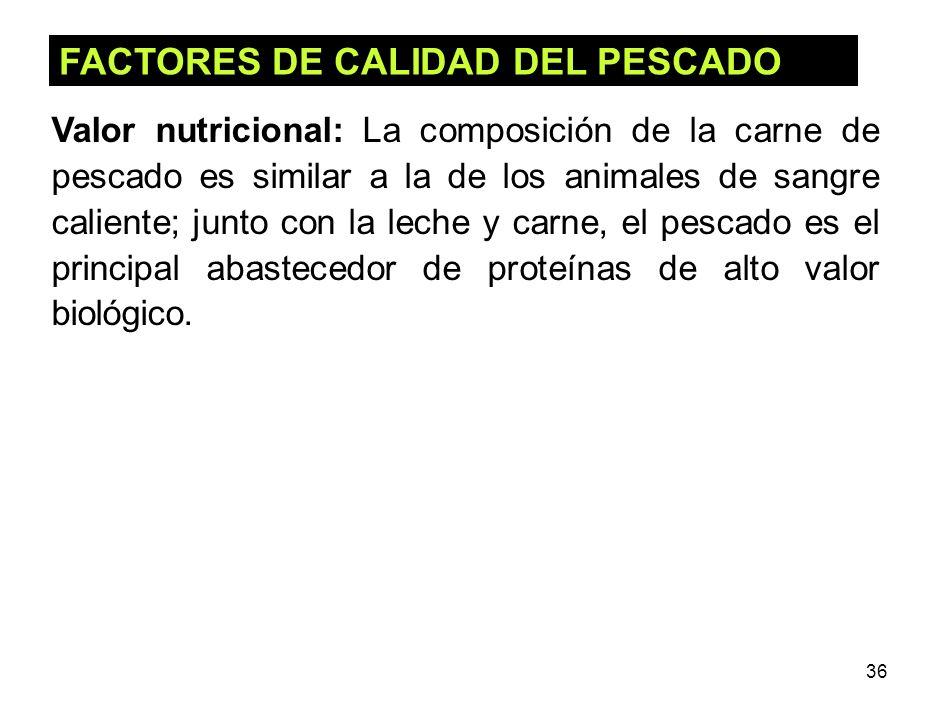 36 FACTORES DE CALIDAD DEL PESCADO Valor nutricional: La composición de la carne de pescado es similar a la de los animales de sangre caliente; junto