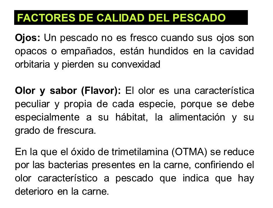 39 FACTORES DE CALIDAD DEL PESCADO Ojos: Un pescado no es fresco cuando sus ojos son opacos o empañados, están hundidos en la cavidad orbitaria y pier