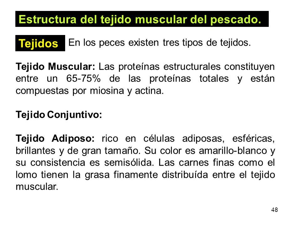 48 Estructura del tejido muscular del pescado. En los peces existen tres tipos de tejidos. Tejido Muscular: Las proteínas estructurales constituyen en