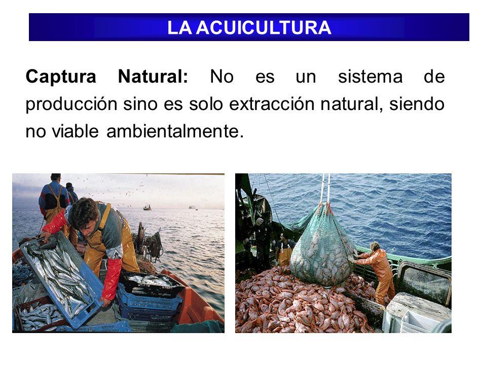 Captura Natural: No es un sistema de producción sino es solo extracción natural, siendo no viable ambientalmente. LA ACUICULTURA