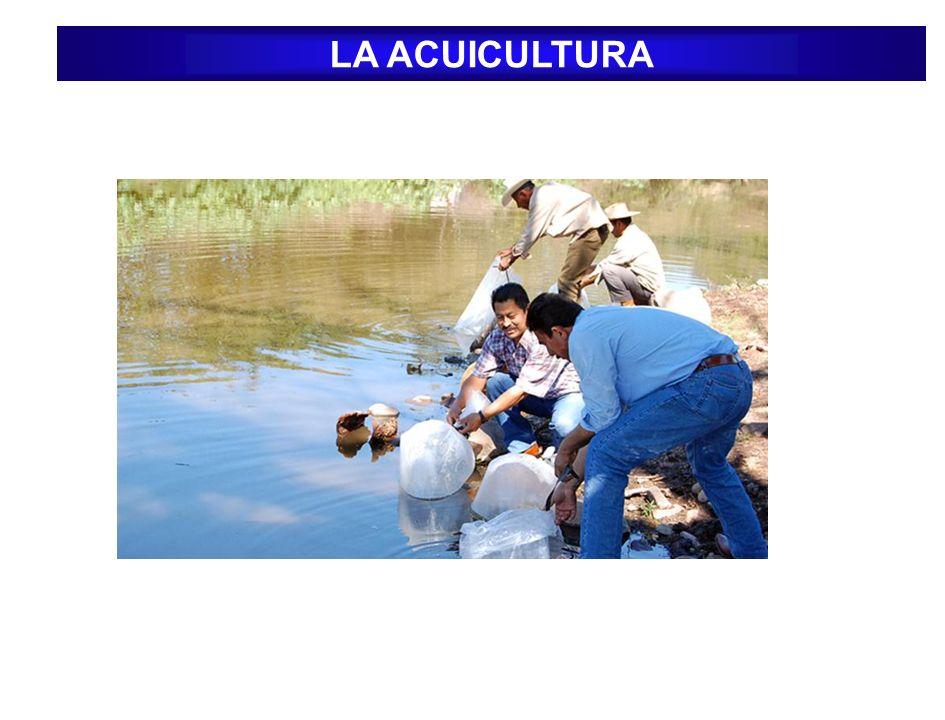 Acuicultura Semi extensiva: Se implementa un cierto grado el uso de tecnologías, Exige un mayor cuidado y monitoreo de los peces, Pueden utilizarse estanques construidos o reservorios de mediana capacidad.