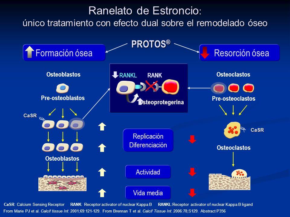 Actividad Vida media Replicación Diferenciación RANKL RANK Osteoprotegerina Pre-osteoclastos Osteoclastos CaSR Resorción ósea PROTOS ® Ranelato de Est