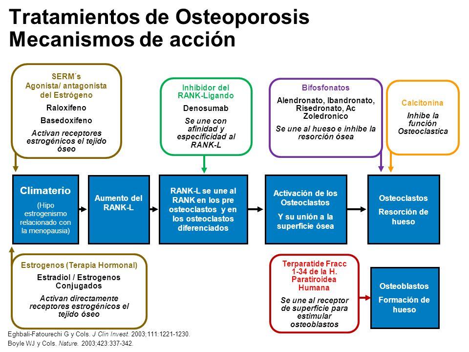 Tratamientos de Osteoporosis Mecanismos de acción Inhibidor del RANK-Ligando Denosumab Se une con afinidad y especificidad al RANK-L Bifosfonatos Alendronato, Ibandronato, Risedronato, Ac Zoledronico Se une al hueso e inhibe la resorción ósea Aumento del RANK-L Osteoclastos Resorción de hueso SERM´s Agonista/ antagonista del Estrógeno Raloxifeno Basedoxifeno Activan receptores estrogénicos el tejido óseo Calcitonina Inhibe la función Osteoclastica Climaterio (Hipo estrogenismo relacionado con la menopausia) RANK-L se une al RANK en los pre osteoclastos y en los osteoclastos diferenciados Activación de los Osteoclastos Y su unión a la superficie ósea Osteoblastos Formación de hueso Terparatide Fracc 1-34 de la H.