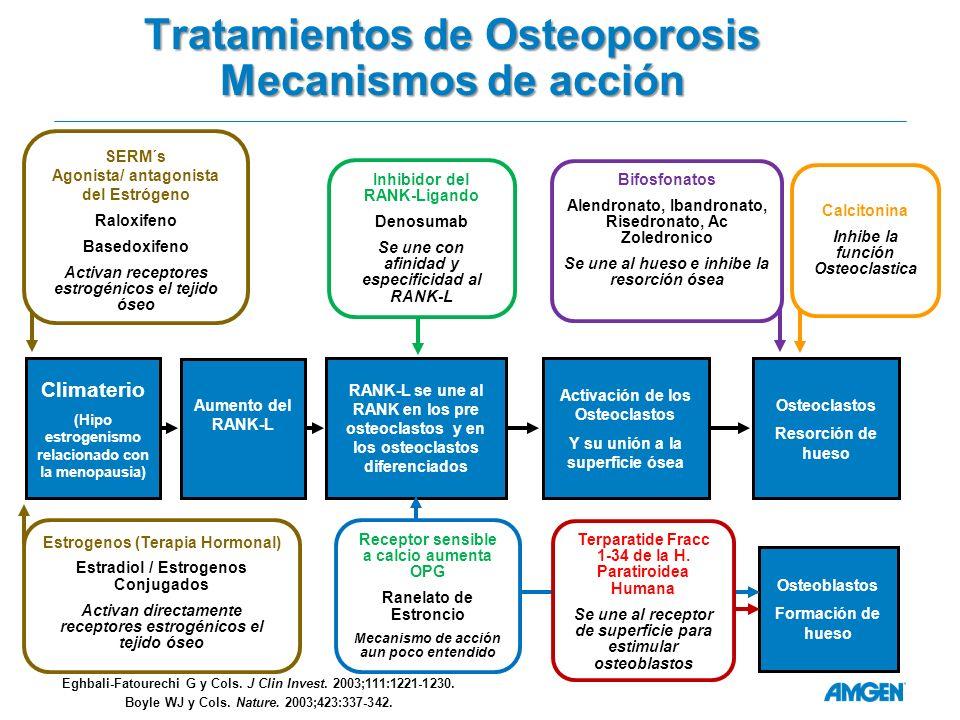 Tratamientos de Osteoporosis Mecanismos de acción Bifosfonatos Alendronato, Ibandronato, Risedronato, Ac Zoledronico Se une al hueso e inhibe la resorción ósea Aumento del RANK-L Osteoclastos Resorción de hueso SERM´s Agonista/ antagonista del Estrógeno Raloxifeno Basedoxifeno Activan receptores estrogénicos el tejido óseo Calcitonina Inhibe la función Osteoclastica Climaterio (Hipo estrogenismo relacionado con la menopausia) RANK-L se une al RANK en los pre osteoclastos y en los osteoclastos diferenciados Activación de los Osteoclastos Y su unión a la superficie ósea Osteoblastos Formación de hueso Inhibidor del RANK-Ligando Denosumab Se une con afinidad y especificidad al RANK-L Eghbali-Fatourechi G y Cols.