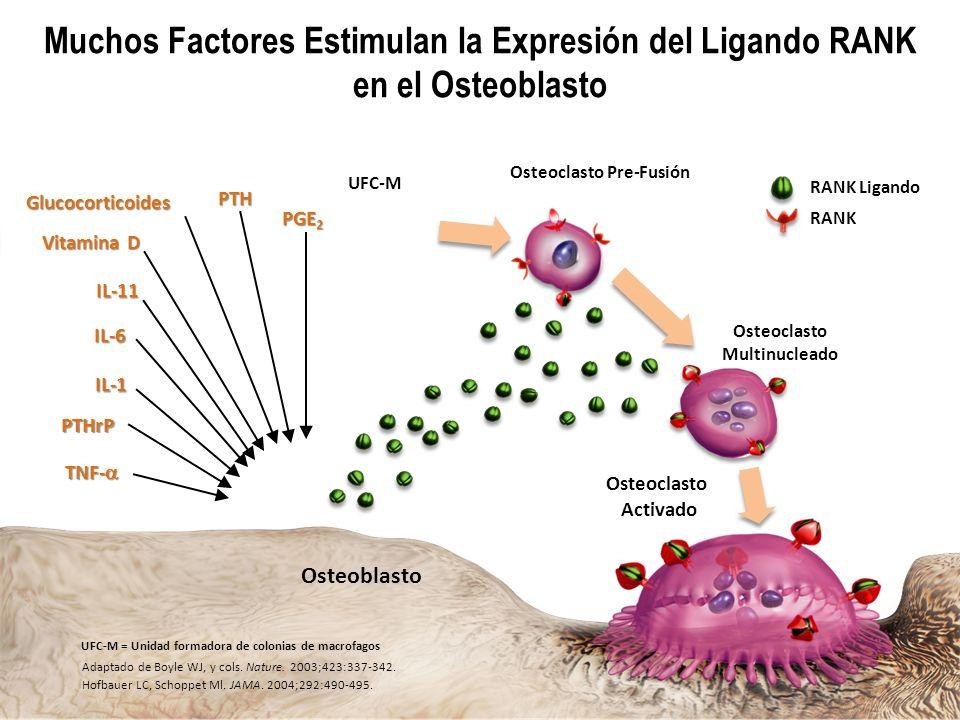 Dr. Alfonso Murillo Uribe Osteoblasto Osteoclasto Activado TNF- TNF- PTH IL-1 PTHrP Glucocorticoides Vitamina D PGE 2 IL-11 RANK Ligando RANK Adaptado