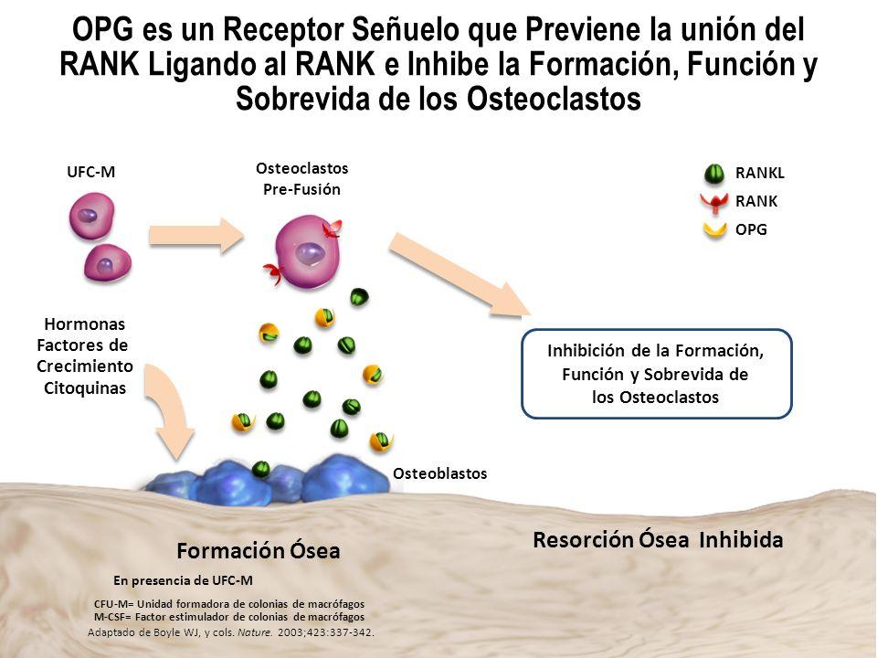Dr. Alfonso Murillo Uribe OPG es un Receptor Señuelo que Previene la unión del RANK Ligando al RANK e Inhibe la Formación, Función y Sobrevida de los