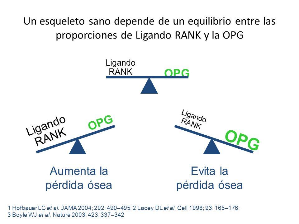 Un esqueleto sano depende de un equilibrio entre las proporciones de Ligando RANK y la OPG Evita la pérdida ósea 1 Hofbauer LC et al. JAMA 2004; 292: