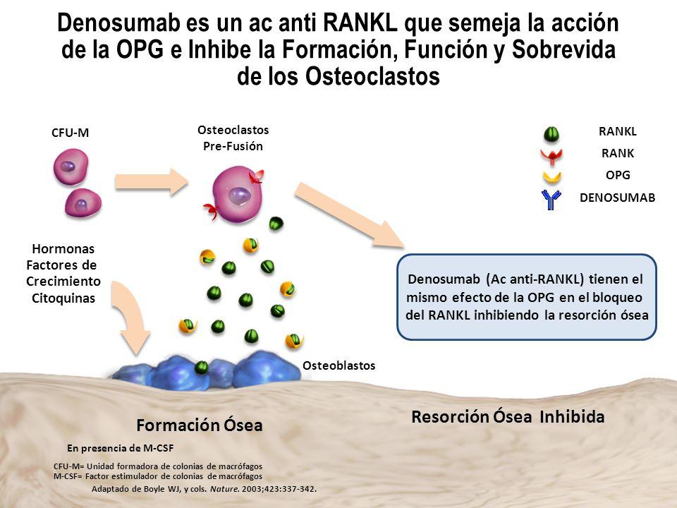 Dr. Alfonso Murillo Uribe Denosumab es un ac anti RANKL que semeja la acción de la OPG e Inhibe la Formación, Función y Sobrevida de los Osteoclastos