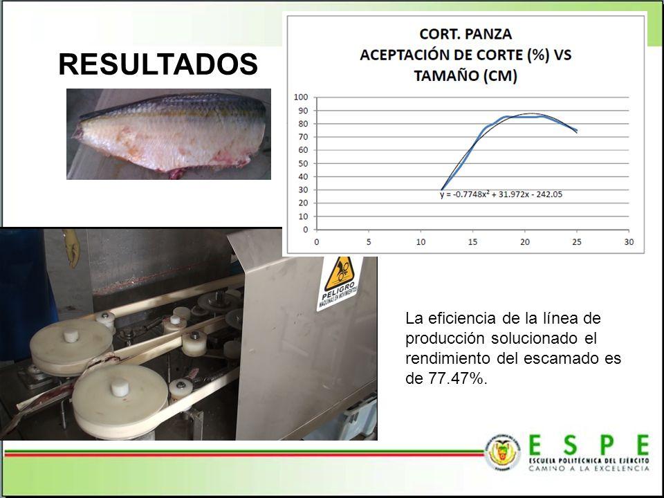. La eficiencia de la línea de producción solucionado el rendimiento del escamado es de 77.47%.