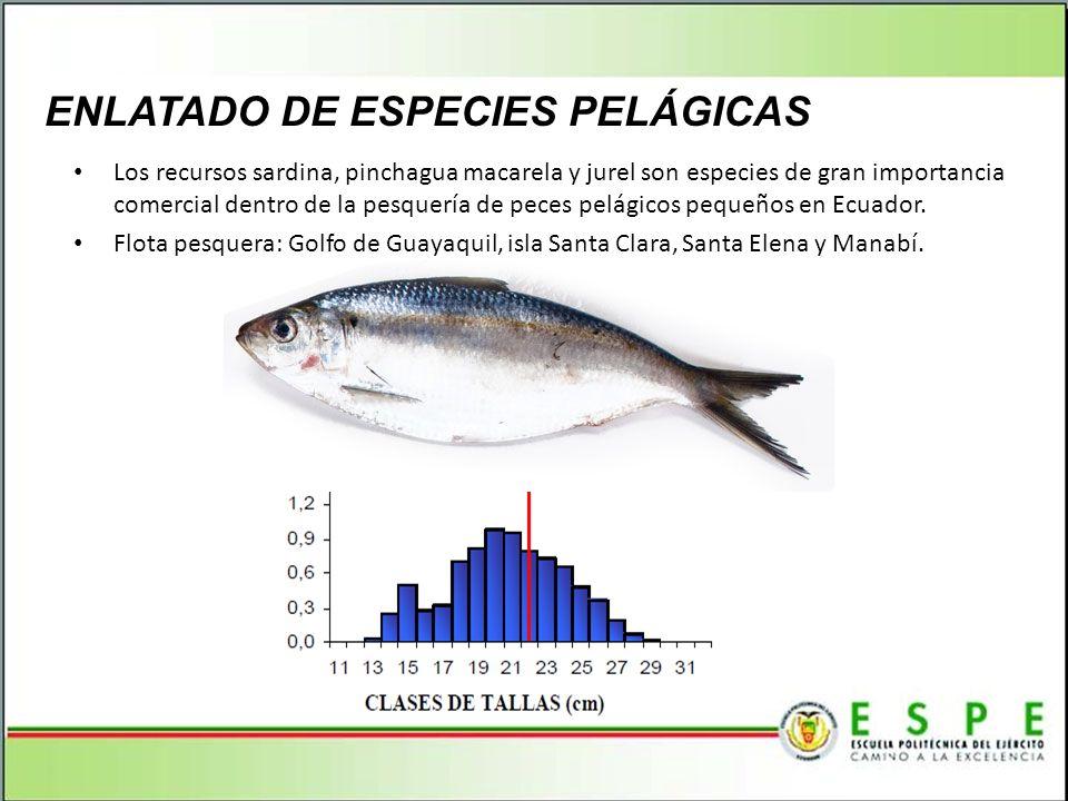 ENLATADO DE ESPECIES PELÁGICAS Los recursos sardina, pinchagua macarela y jurel son especies de gran importancia comercial dentro de la pesquería de p