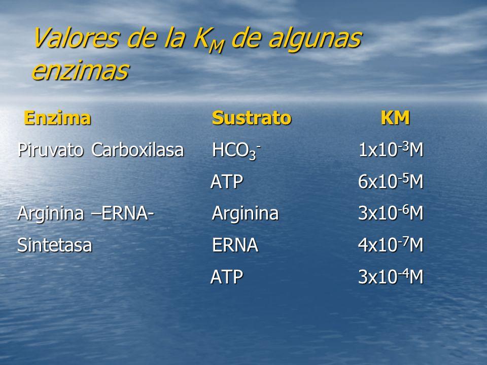 Valores de la K M de algunas enzimas Enzima Sustrato KM Enzima Sustrato KM Piruvato Carboxilasa HCO 3 - 1x10 -3 M ATP 6x10 -5 M ATP 6x10 -5 M Arginina –ERNA-Arginina 3x10 -6 M Sintetasa ERNA4x10 -7 M ATP 3x10 -4 M ATP 3x10 -4 M