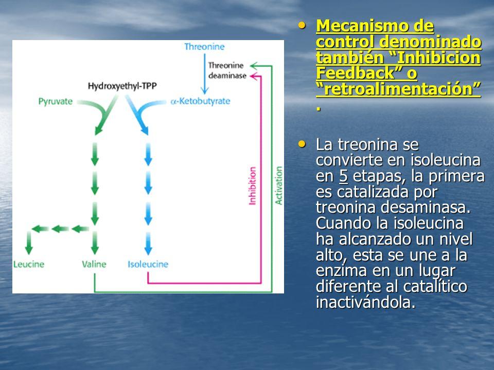 Mecanismo de control denominado también Inhibicion Feedback o retroalimentación.